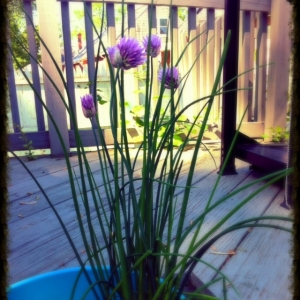 Check out the chives!